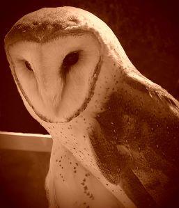 beautiful bird vignette sepia